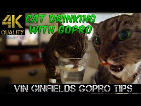 GoPro Tip #103 Cat Drinking With A GoPro (4K)