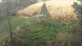 Shooting A Buck With Bow Mounted GoPro Camera
