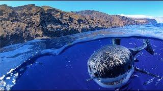 GoPro Hero8: Great White Shark Cage Diving!! | MicBergsma