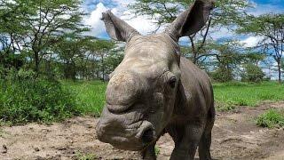 GoPro: Last of the Rhinos – Baby Ringo
