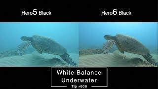 Hero6 vs Hero5 Underwater White Balance Comparison - GoPro Tip #606