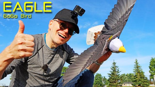 The GoGo Bird EAGLE is Fun for the Whole Family - Review