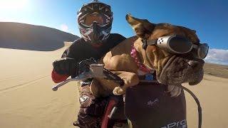 GoPro: Lexus The Dirt Bike Dog