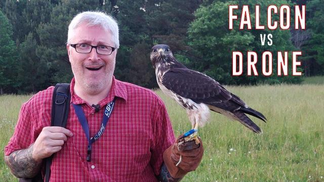 Chasing FALCONS! - Is a drone fast enough?