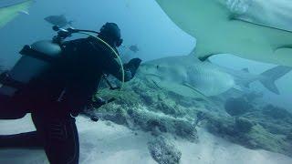 GoPro VR BTS: Diving with Sharks