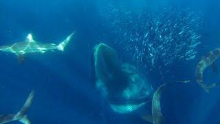GoPro Awards: Sharks, Dolphins, Penguins and Whales