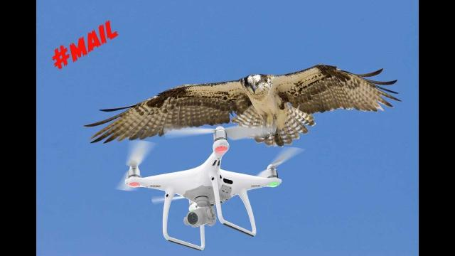 How do you stop BIRDS  attacking your drone? //MAIL- 109