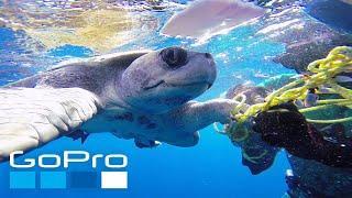 GoPro: Top 10 Underwater Moments