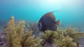 Scuba Diving in Marathon, Florida
