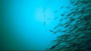 GoPro Underwater Mackerel Fishing.