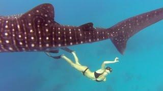 GoPro Awards: Ocean Ramsey and a Whale Shark
