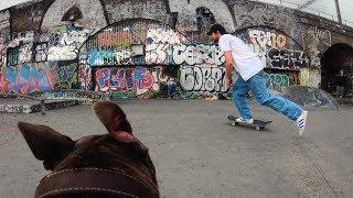 GoPro Skate: Follow Cam Dog in 4K
