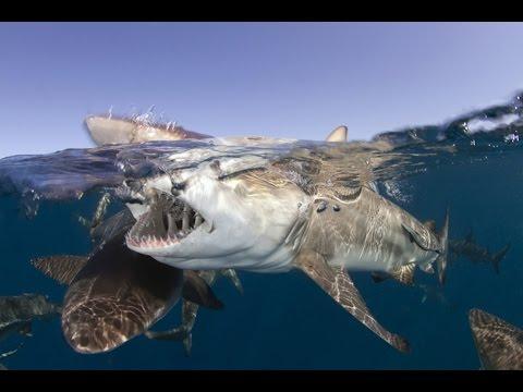 GoPro - Scuba Diving Cozumel - Living Underwater