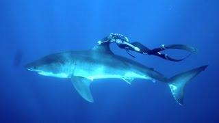 GoPro: A Blonde and a Great White Shark
