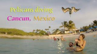GoPro - Pelicans Diving in Cancun, Mexico