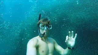 GoPro Awards: Diving in a Vortex of Sardines