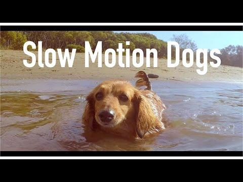 GoPro Hero 4 Slow Motion Dogs