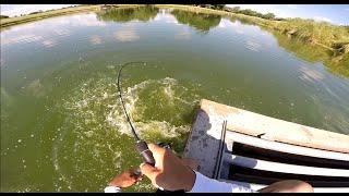 Carp fishing (Grass Carp) GoPro Hero3+ 720p HD