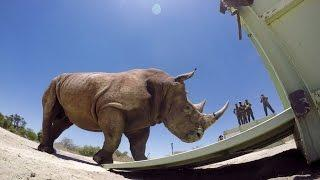 GoPro: The Last of the Rhinos