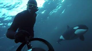GoPro: Freediving with Wild Orcas