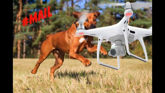 When Animals Chase DRONES..Who ends up in the DOG HOUSE? //#MAIL- 100