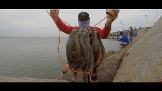 Flounder fishing (October limit) GoPro Hero3+ 720p HD
